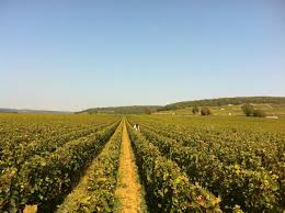 The Le Grappin Estate in Burgundy
