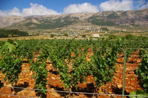 Bekaa-Valley-Lebanon.jpg